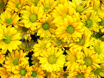 Bouquet of yellow flower
