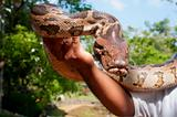 Hand-reared python