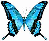 Beautiful vector isolated blue butterfly