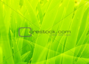 Abstract background of green color