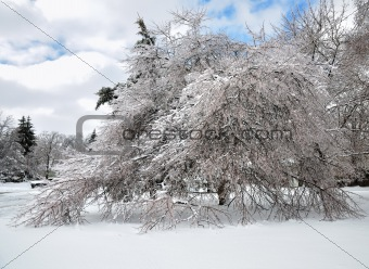 after ice storm