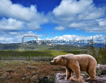mountain landscape with bear