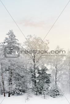 Vinter landscape