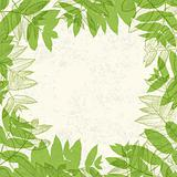 Green leaves frame on paper texture. Vector illustration, EPS10.