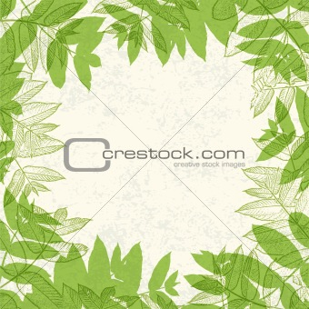 Green leaves frame on paper texture. Vector illustration, EPS10.