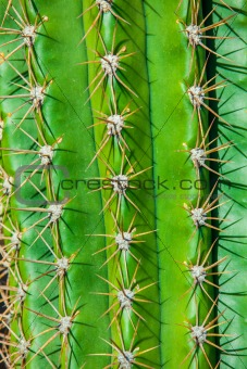 Close-up cactus