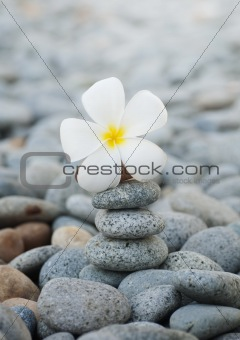 Frangipani flowers and pebbles