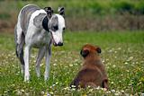 whippet and puppy malinois