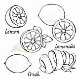 Lemon citrus vector set