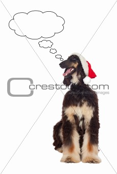 Borzoi breed dog with Santa hat