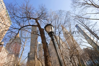 buildings and naked trees in New York