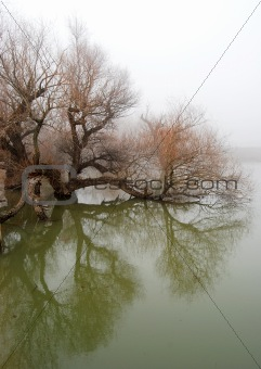 Tree in swollen waters