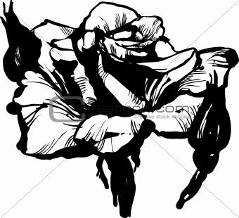 1 gorgeous rose bud(2).jpg