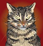 Serious Cat illustration