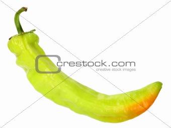 Single green fresh chilli-pepper