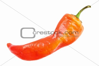Single red fresh chilli-pepper
