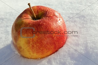 Apple lay on snow at day light