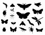 Vector insects set