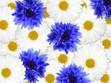 Background of blue and white flowers