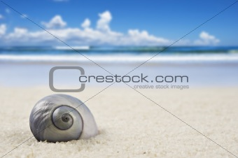 a Beautiful perfectly shaped sea shell on the beach