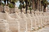 Row of sphinxes at Luxor temple