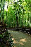 Bamboo grove