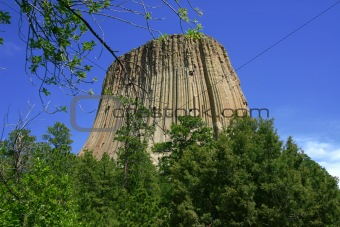 Devil's Tower with Branch