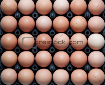 close up of eggs in plastic container