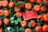 Chinese New Year Decoration - Red greeting card on tangerines tr