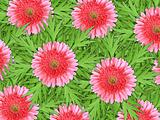 Background of pink flowers and green leaf