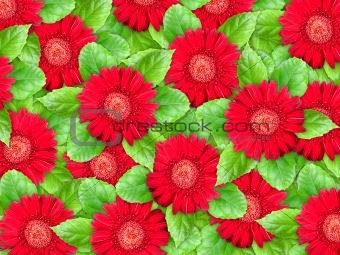 Background of red flowers and green leaf