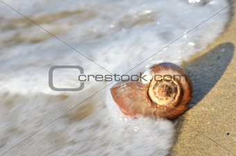 shell on beach with waves