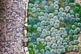 Cobbled road and green plants pattern in San Giorgio Castle in L