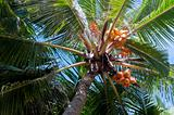 Looking to the crown of palm