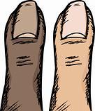 Human Thumb