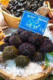 Fresh sea urchins on ice in French Fish Market