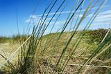 Vacance sky through marram grass