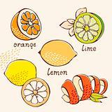 Citrus doodle set