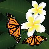 vector frangipani and butterflies