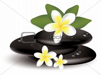 vector frangipani flowers and wet stones