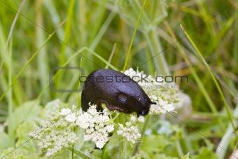 Slug on a Flower