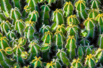 Close-up cactus