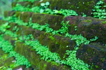 Antient wall covered by moss and grass