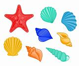 Seashells and sea star