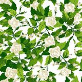 Seamless background with white roses