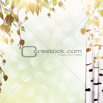 summer background with birch