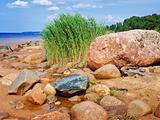 Sea rocky beach