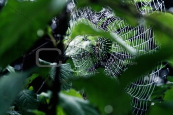 Cobwebs on plant