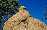 Termite hill