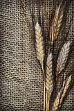Wheat ears